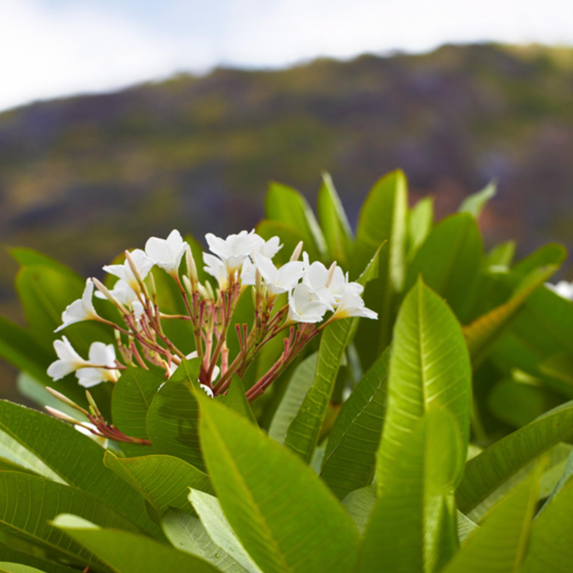 Luxury Real Estate PPC | Sugar Beach Residences | Native Flowers Closeup
